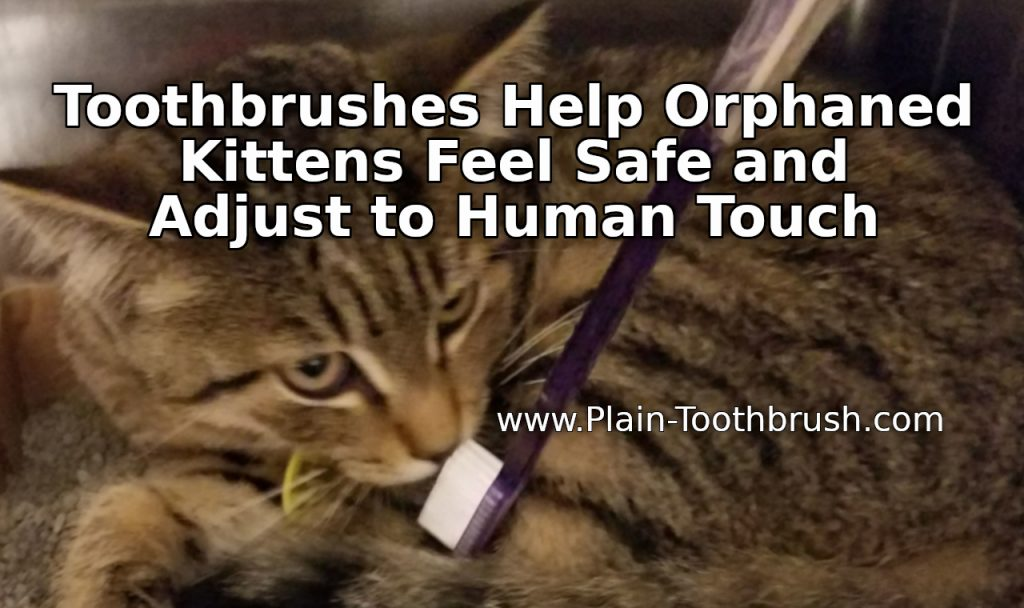 Toothbrushes Help Orphaned Kittens Feel Safe and Adjust to Human Touch